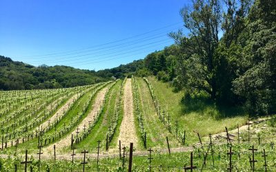 Plants that attract beneficial insects and keep Sonoma vineyard healthy
