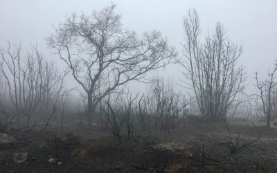 Sonoma Firestorm, Part 3, Hiking Arrowhead Mountain