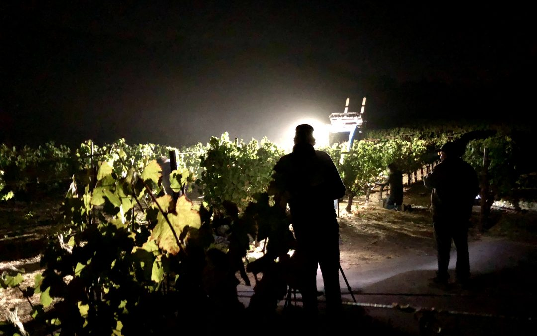 "Sonoma Harvest 2018 – Part 1 ""The Night"""