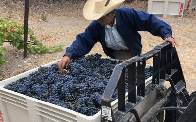 2019 harvest wraps up…